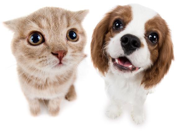 pet insurance for cute pets